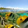 le-tahaa-activities-snorkelling