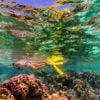 le-tahaa-activities-snorkel