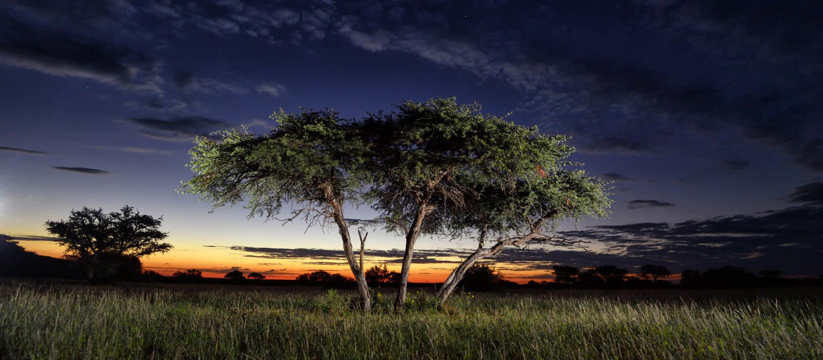 shepards-tree-tswalu-kalahari