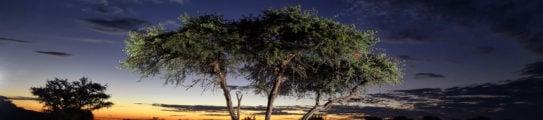 shepards-tree-tswalu-kalahari
