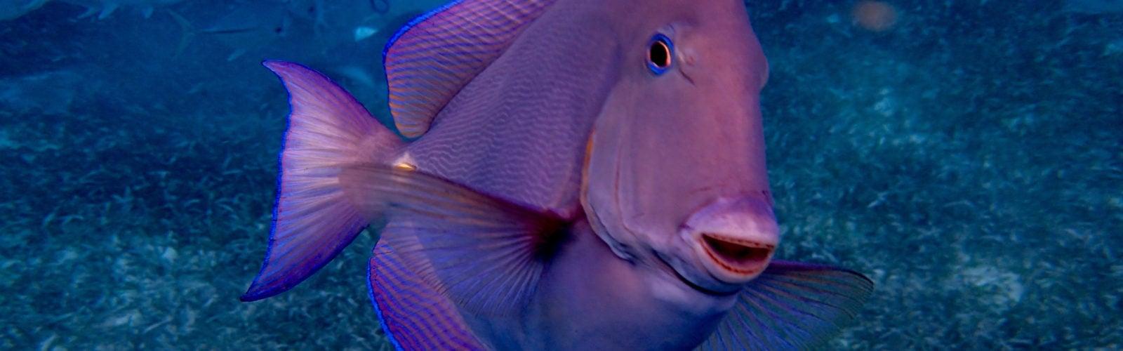 ambergris-caye-fish