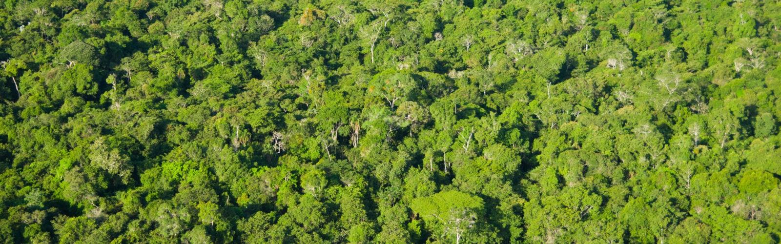 brazil-amazon-canopy