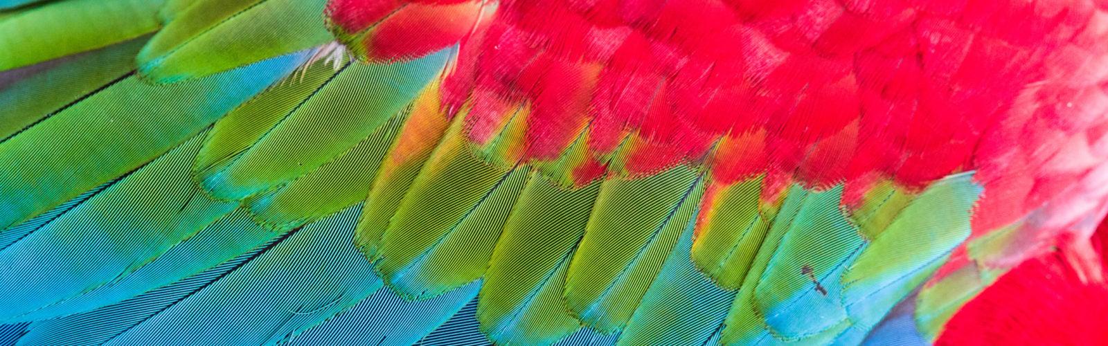 pantanal-bird-feathers