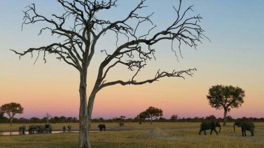 Scott's Pan at Sunset, Zimbabwe, Linkwasha