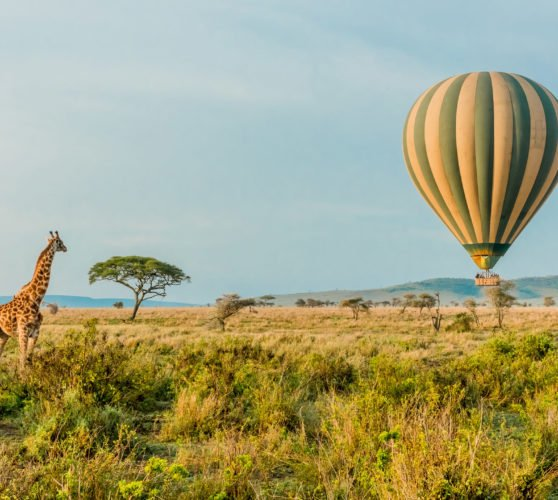 Giraffe watching a hot air balloon, Tanzania
