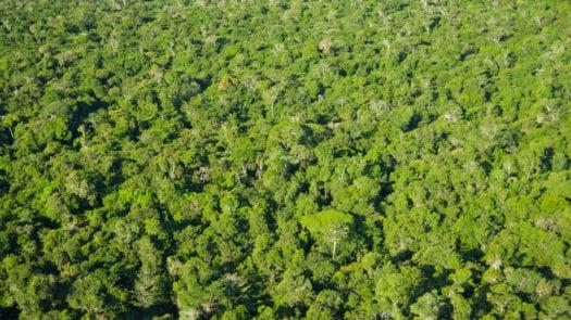 aerial-view-amazon-brazil