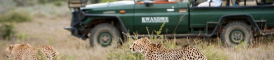 Safari vehicle, Kwandwe