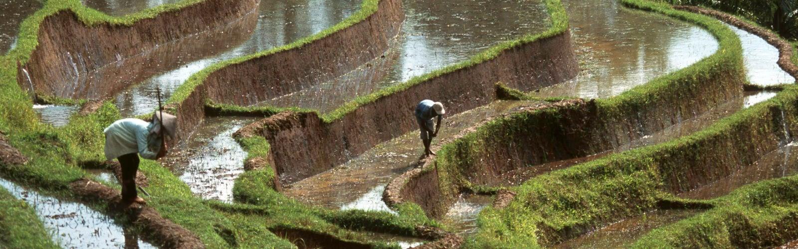jatiluwih-rice-terraces-Bali-Indonesia