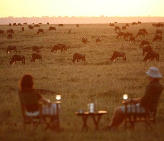sundowners-africa-elephants