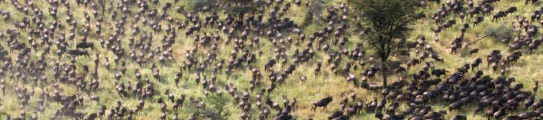Great Migration Aerial Shot