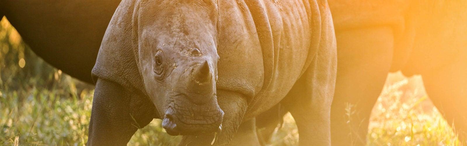 rhinos-singita-keith-ladzinski