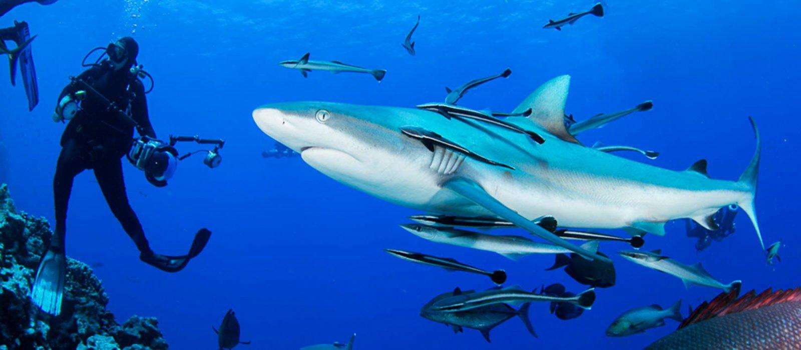 Shark, scuba diving