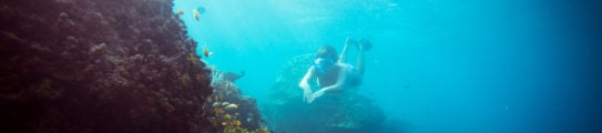 Indonesia Snorkelling Freediving