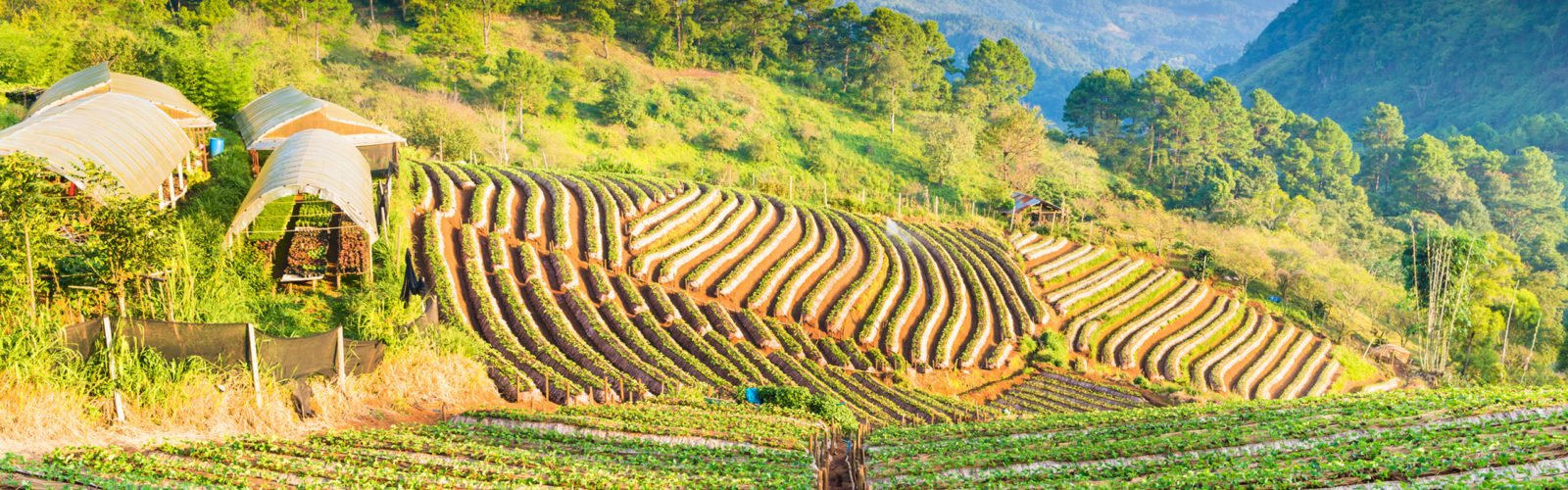 chiang-rai-countryside