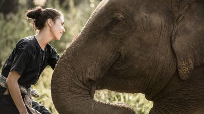 four-seasons-elephants