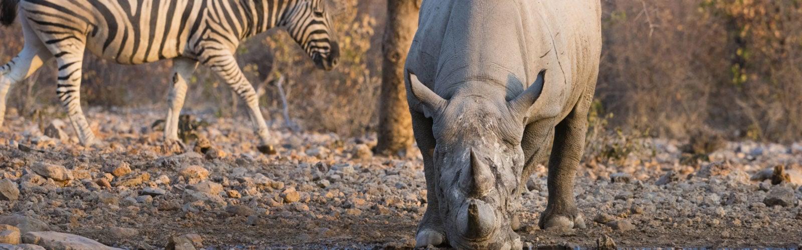 Ongava Reserve Namibia Zebra Rhinoceros