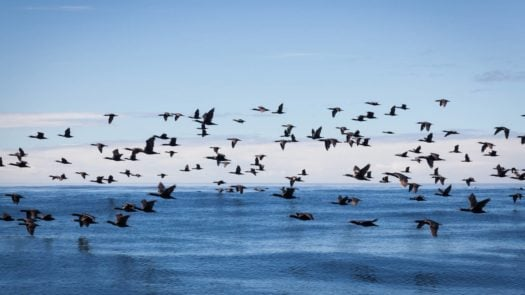 Birds fly over the ocean water, Grootbos Private Reserve, the Whale Coast, South Africa