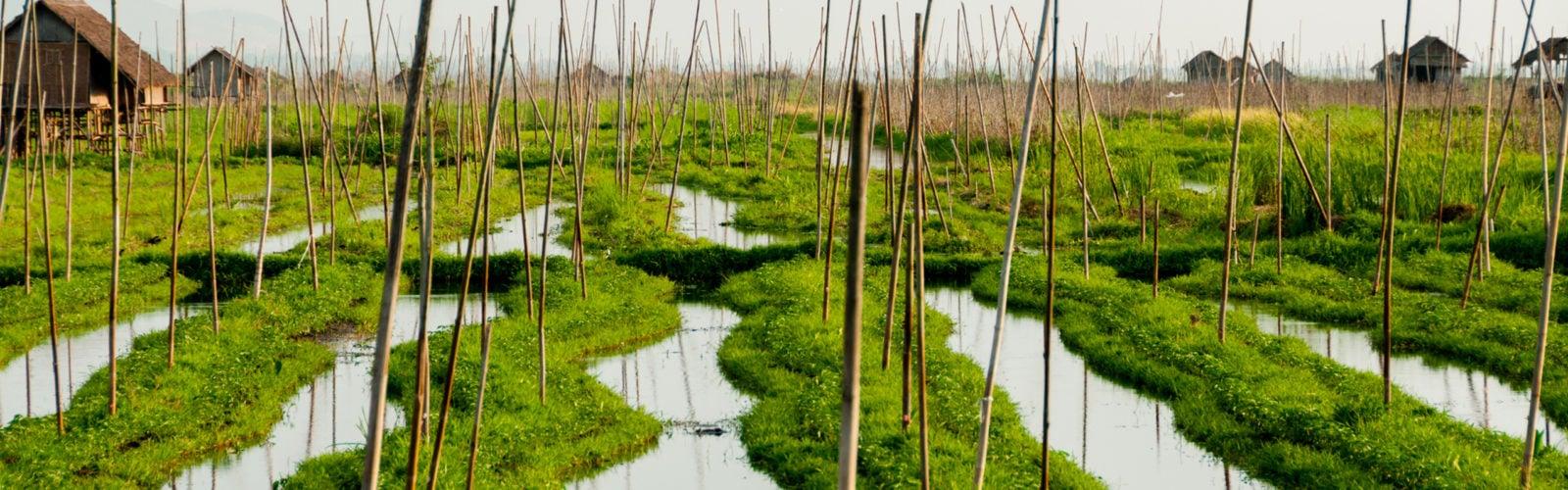 inle-lake-floating-garden