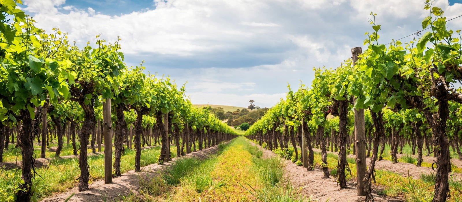 vineyard-barossa-valley-australia