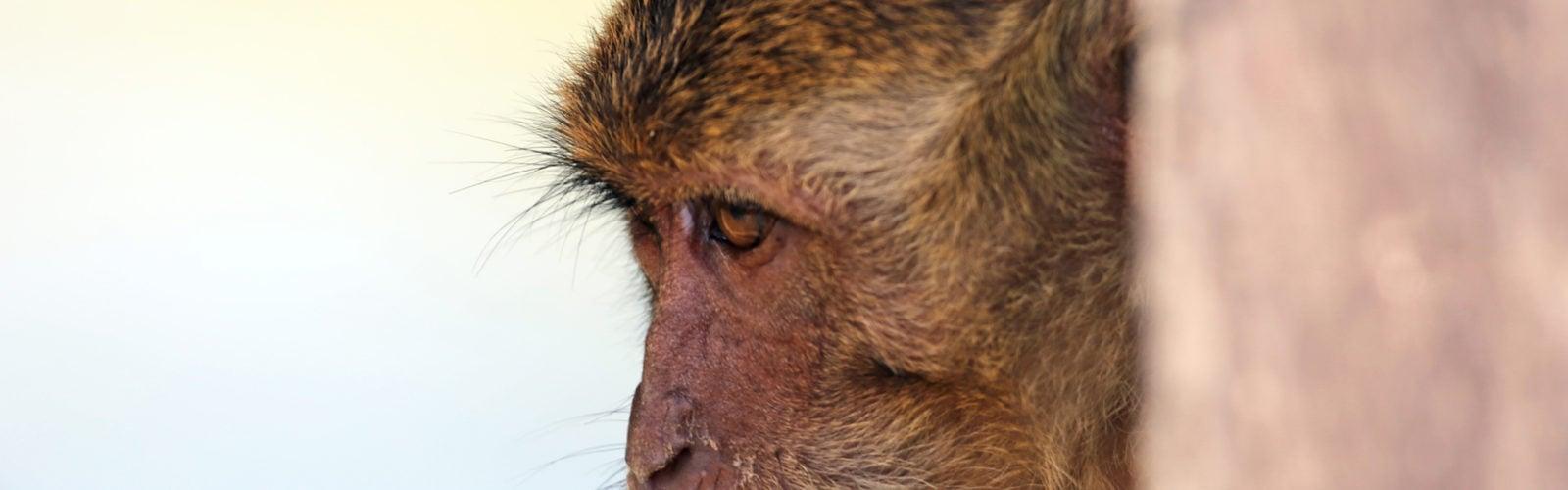 rinca-komodo-monkey
