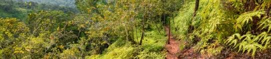 belize-hiking-trail