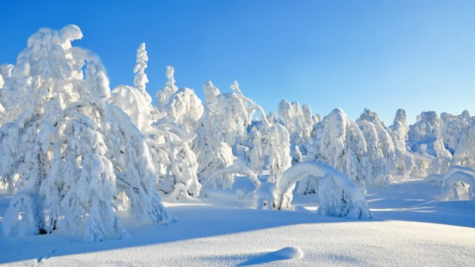 Swedish-Lapland-snow