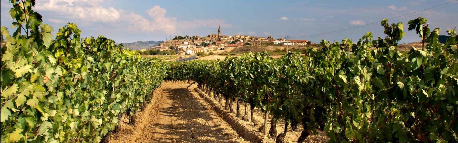 Vineyard, La Rioja, Spain