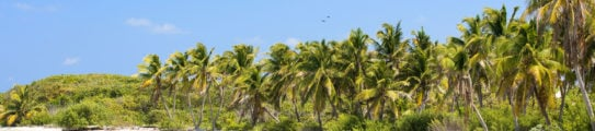 yucatan-coast-mexico