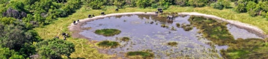 Okavango Delta, Aerial view: Elephants at a pond, Botswana Africa