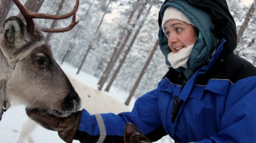 A reindeer eating from a ladies hand on a Reindeer farm in Finland.