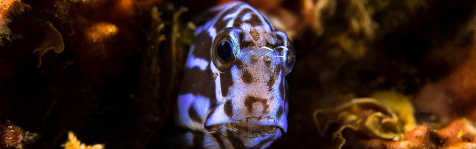 sumba-snorkelling