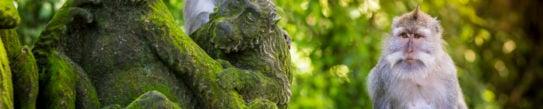 monkey-temple-ubud