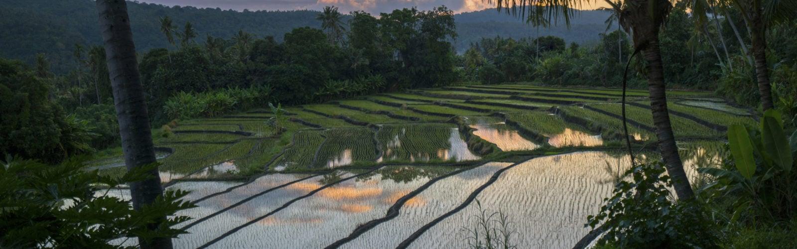 amankila-rice-paddy-view