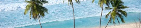 seychelles-palm-trees