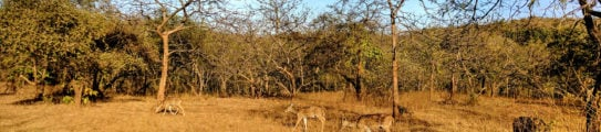 gir-forest-national-park-deer
