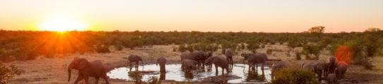 elephants-drinking-water-waterhole-Namibia