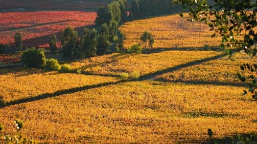 colchagua-valley-wine-region-chile