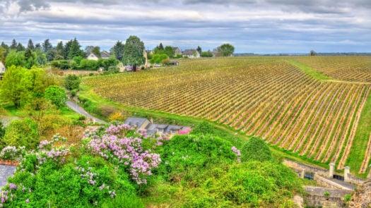 vineyard-loire-valley-france