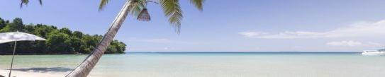 koh-khood-beach-and-palm