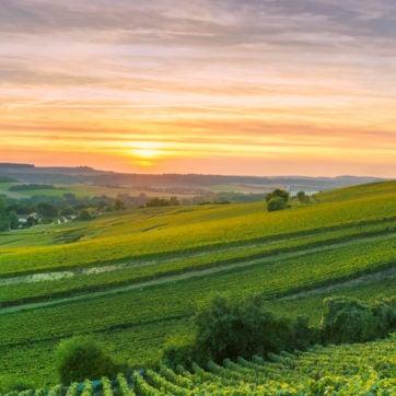 scenic-landscape-champagne-france