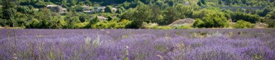 provence-sault-france