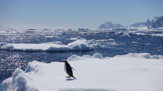 emperor-penguin-antarctica