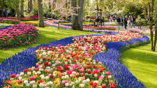 keukenhof-gardens-amsterdam-netherlands