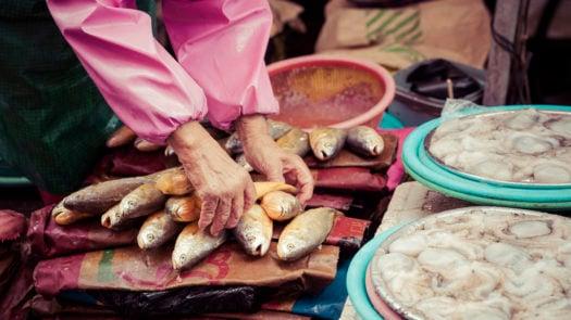 jagalchi-fish-market-busan-south-korea
