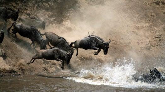 wildebeest-great-migration-serengeti-tanzania