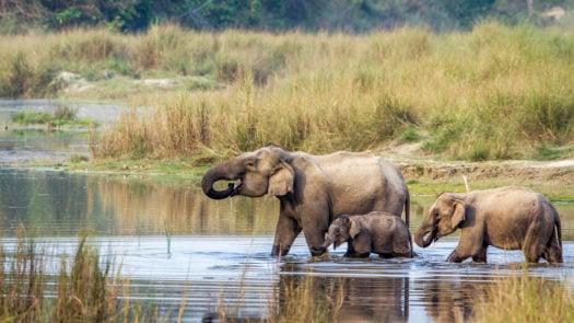 bardia-national-park-nepal-elephants