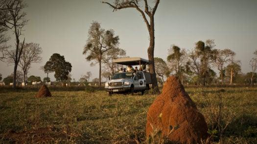 caiman-ecological-refuge-brazil