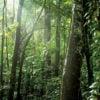 Trees of the Peruvian Amazon Rainforest