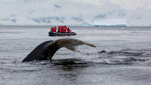 whale-passengers-antarctic-peninsula