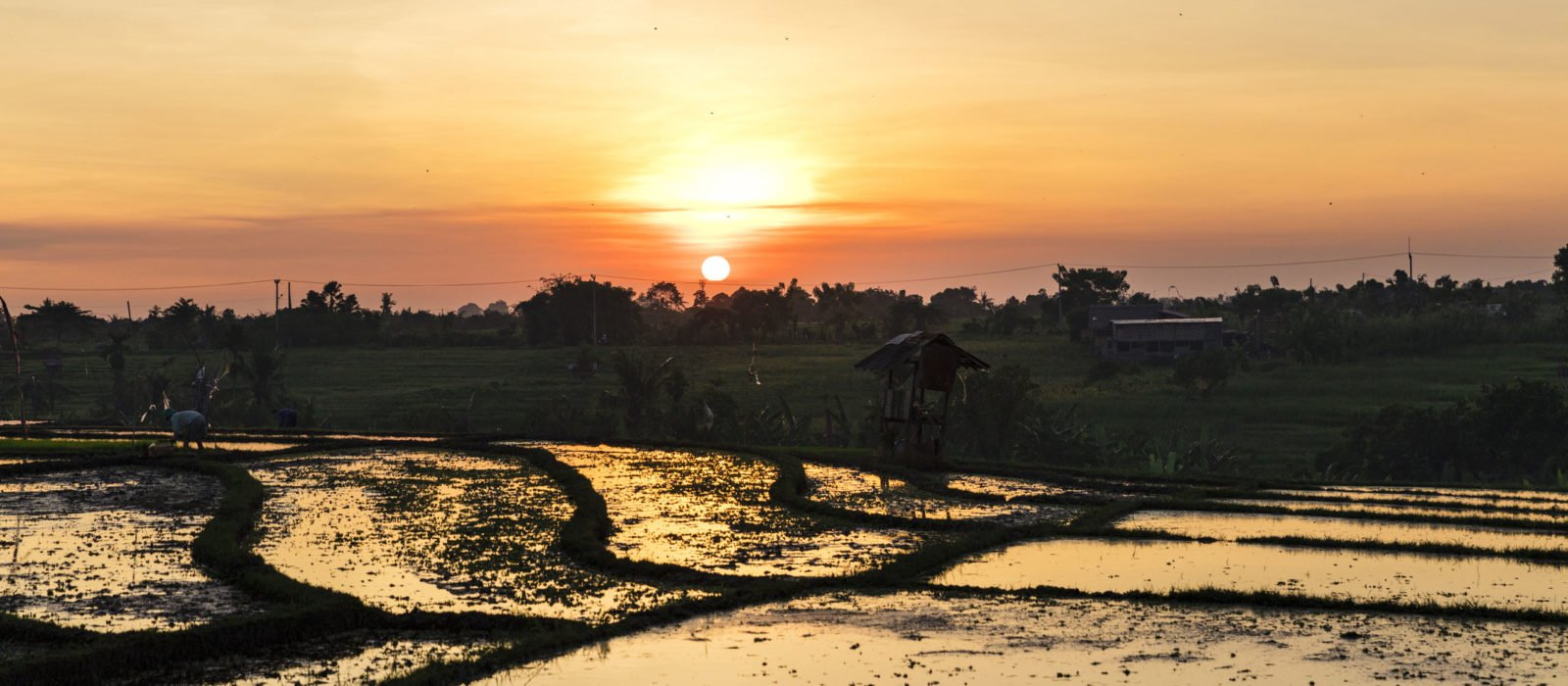 sunset-rice-fields-canggu-bali-indonesia